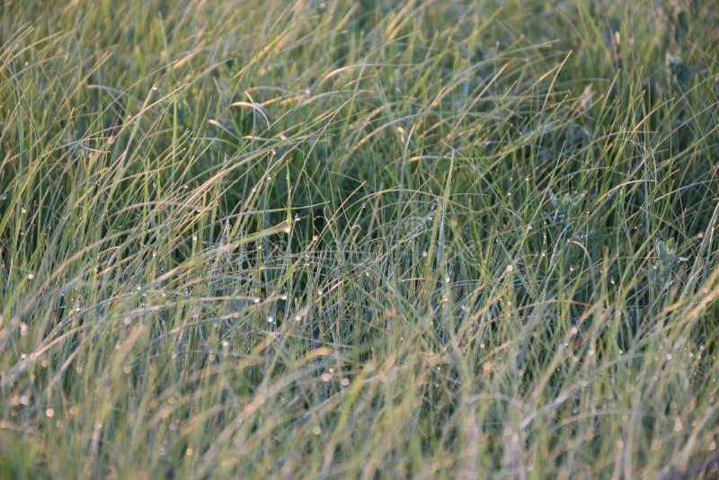 Uitstraling van de dauw in de stralen van de het toenemen zon stock foto's