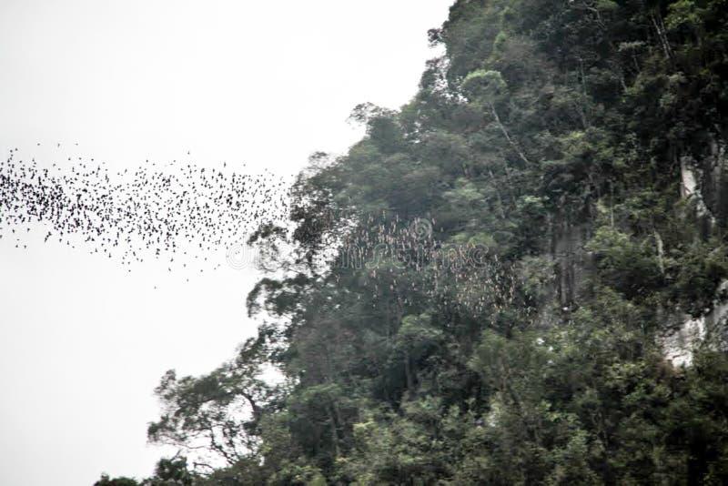 Uittocht van knuppels van het Hertenhol, het Nationale Park van Mulu stock fotografie