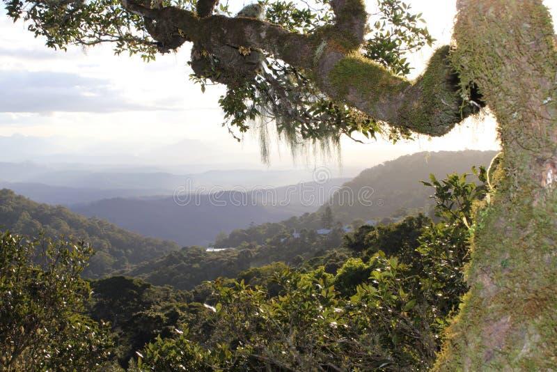 Uitzicht van boven op een reuzeboom stock afbeeldingen