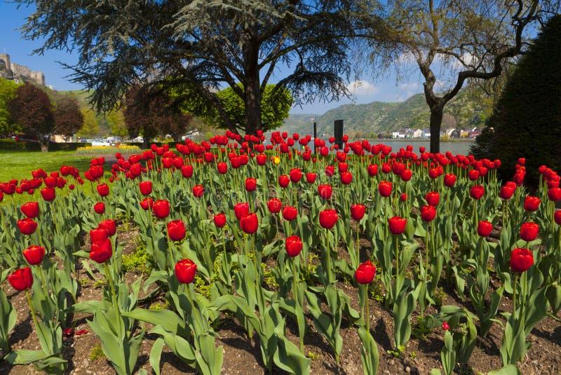 Uitzonderlijke mening over een groot rood tulpenbed stock foto's