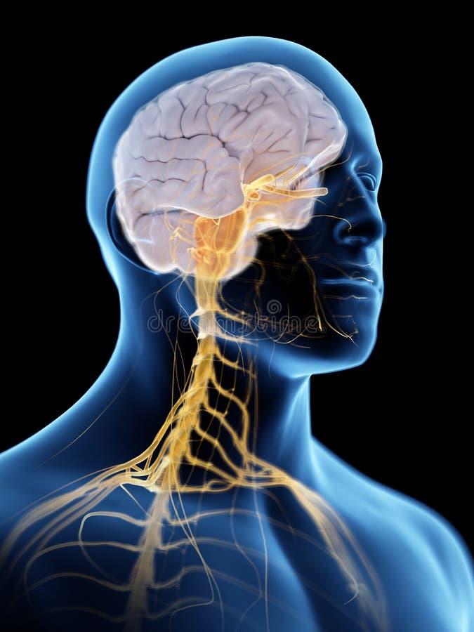Układ nerwowy i mózg royalty ilustracja