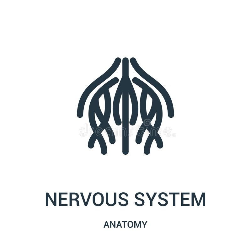 układ nerwowy ikony wektor od anatomii kolekcji Cienieje kreskową układu nerwowego konturu ikony wektoru ilustrację Liniowy symbo ilustracja wektor