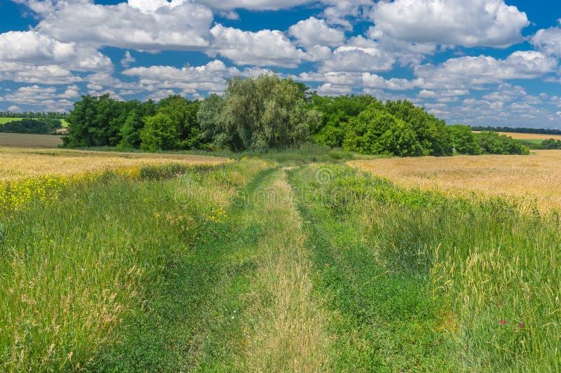 Ukraiński lato krajobraz z ziemską drogą obrazy royalty free