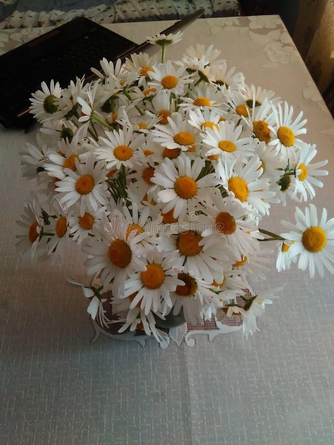 Ukraina den mest härliga vita buketten av vildblommor royaltyfri foto