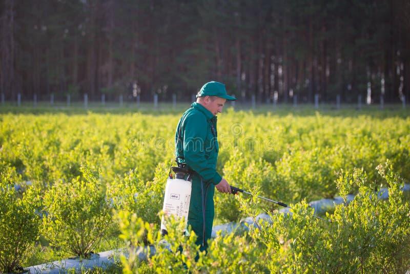 Ukraina Kiev region Juni 2, 2017: Jordbruks- arbetare i grön likformig som besprutar bekämpningsmedel på blåbärfält fotografering för bildbyråer