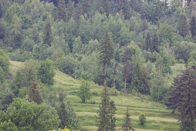 Ukrainare Carpathians royaltyfri foto