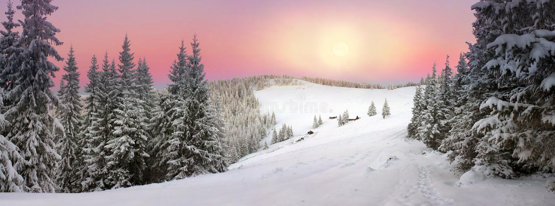 UkrainareCarpathians snöig skog arkivfoton