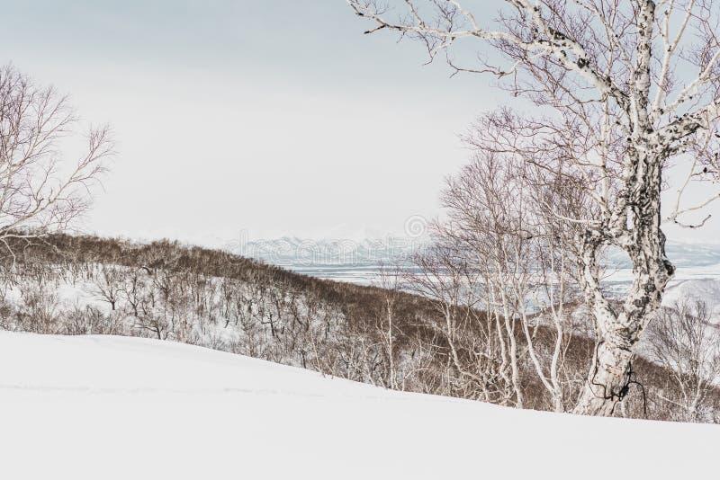 ukraine för dragobratliggandeberg vinter Kamchatka halvö arkivbilder