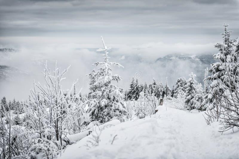 ukraine för sun för strålar för stående för crimea aftonvandring vinter arkivfoto