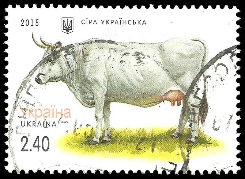 Grey Ukrainian Cow. Ukraine - stamp 2015: Color edition on Domestic Animals, shows Grey Ukrainian Cow, Bos primigenius taurus vector illustration
