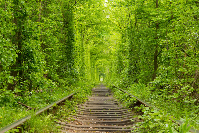 ukraine Tunnel der Liebe lizenzfreies stockfoto