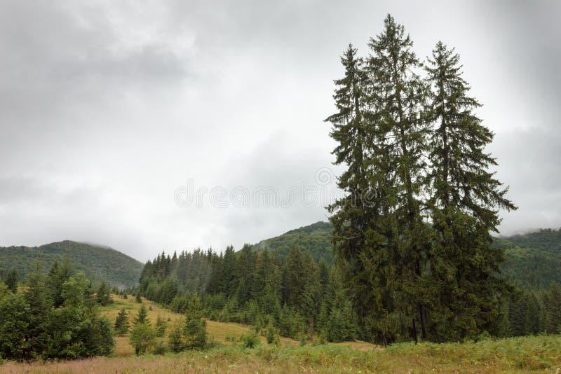 Ukrainer Karpaten nach einem warmen Sommerregen stockbild