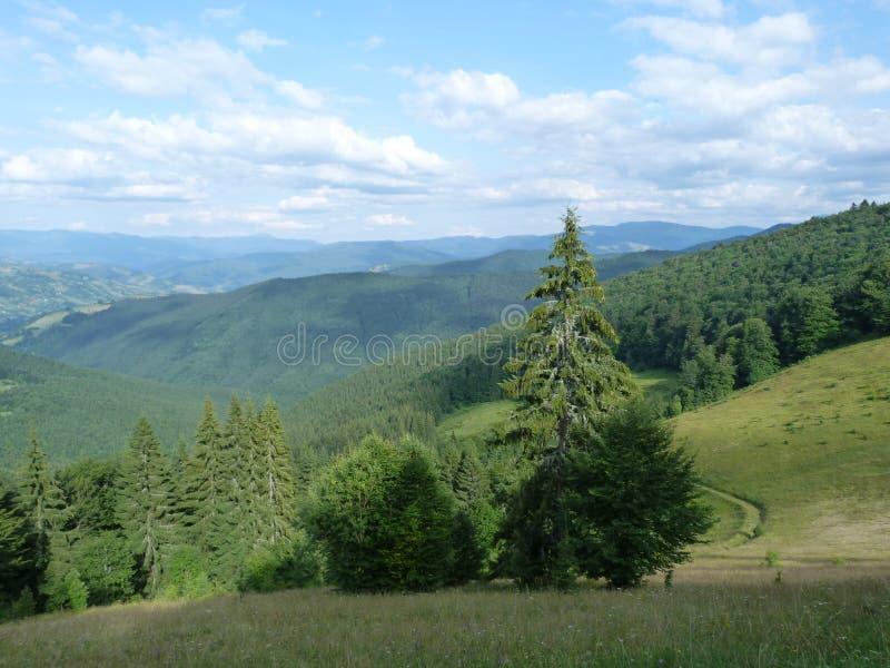 The Ukrainian Carpathians. stock image