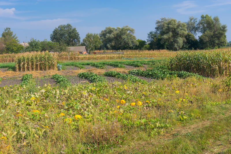 Ukrainian country landscape with vegetable garden in rural area. At early fall season royalty free stock image
