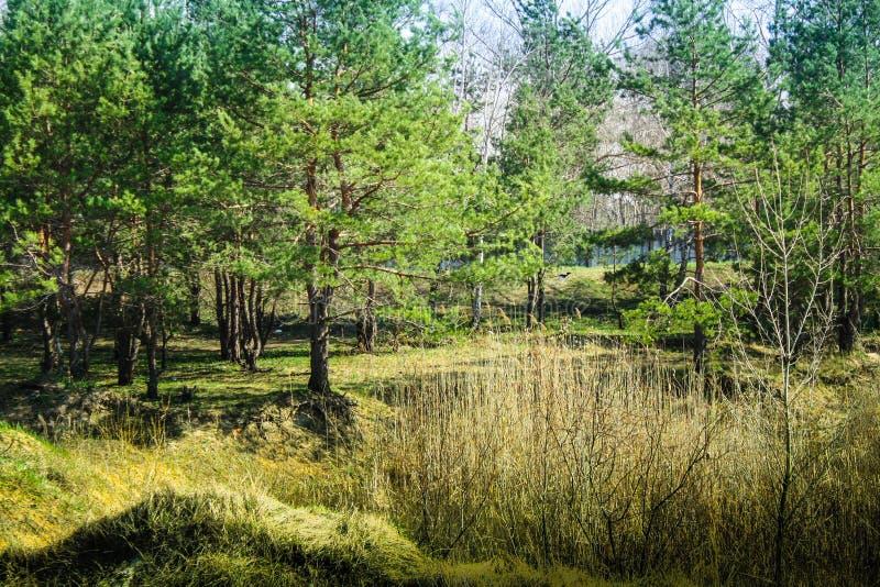 Αποτέλεσμα εικόνας για ukrainian forest