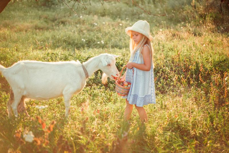 Ukrainian girl on a farm feeds a goat. Cute little girl with long blonde hair at sunny sunset spends time with a pet. Cute baby 6 stock images