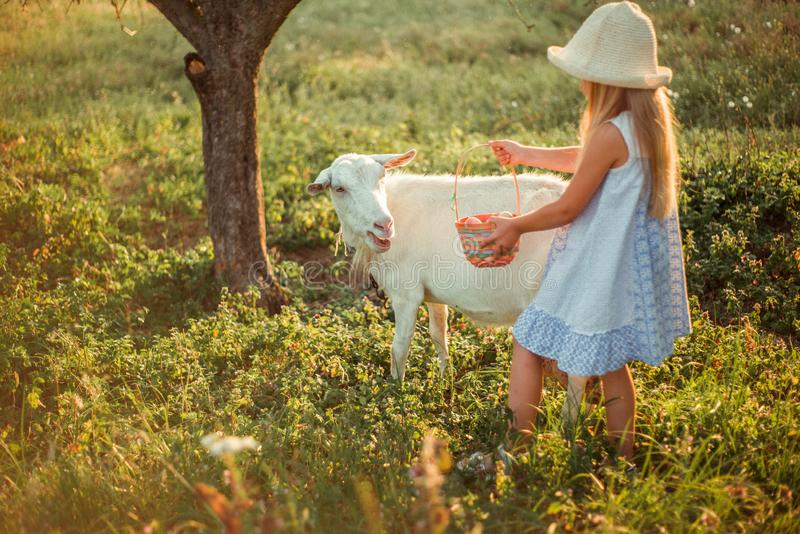 Ukrainian girl on a farm feeds a goat. Cute little girl with long blonde hair at sunny sunset spends time with a pet. Cute baby 6 royalty free stock photos