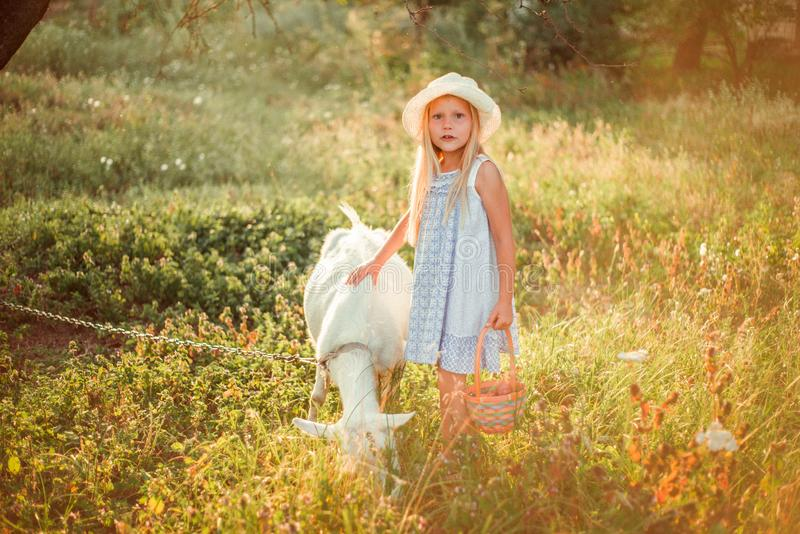Ukrainian girl on a farm feeds a goat. Cute little girl with long blonde hair at sunny sunset spends time with a pet. Cute baby 6 stock image