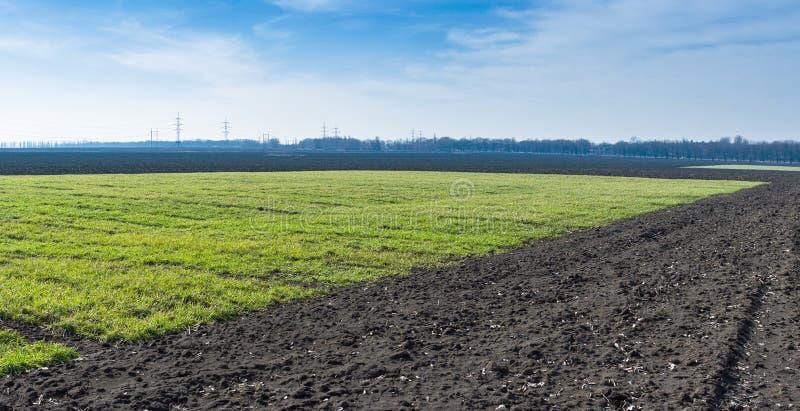 Download Ukrainian Landscape With Winter Crops Stock Image - Image: 29561393