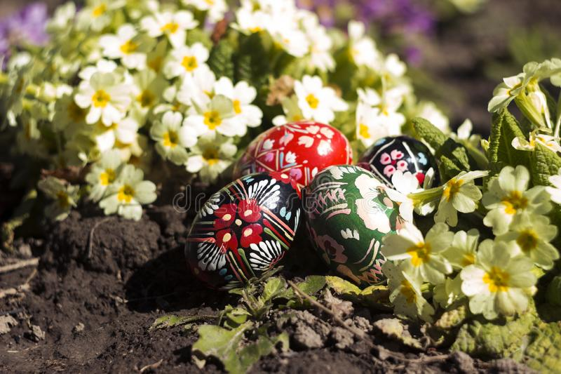 Ukrainian national krashanki lie on the ground against the background of yellow and pink primrose. Easter eggs near spring flowers royalty free stock image