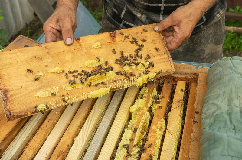 Peasant inspecting roof plank from hive in own bee yard stock photos