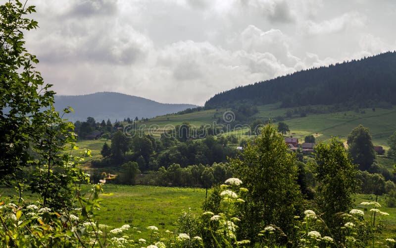 Ukrainisches Land seiten- Karpaten-Berg am Sommer stockfotos