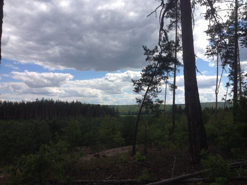 Ukrainsk skog och himmel royaltyfri bild