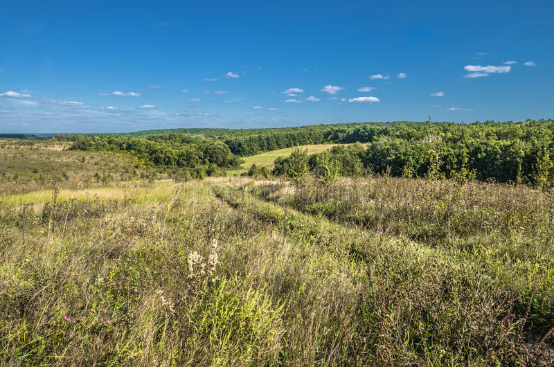Ukrainskt sommarlandskap med vetefältet arkivfoto