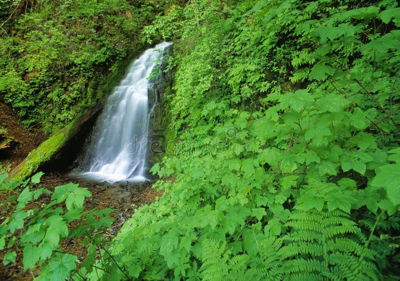 Ukryty Wodospad Zdjęcia Stock