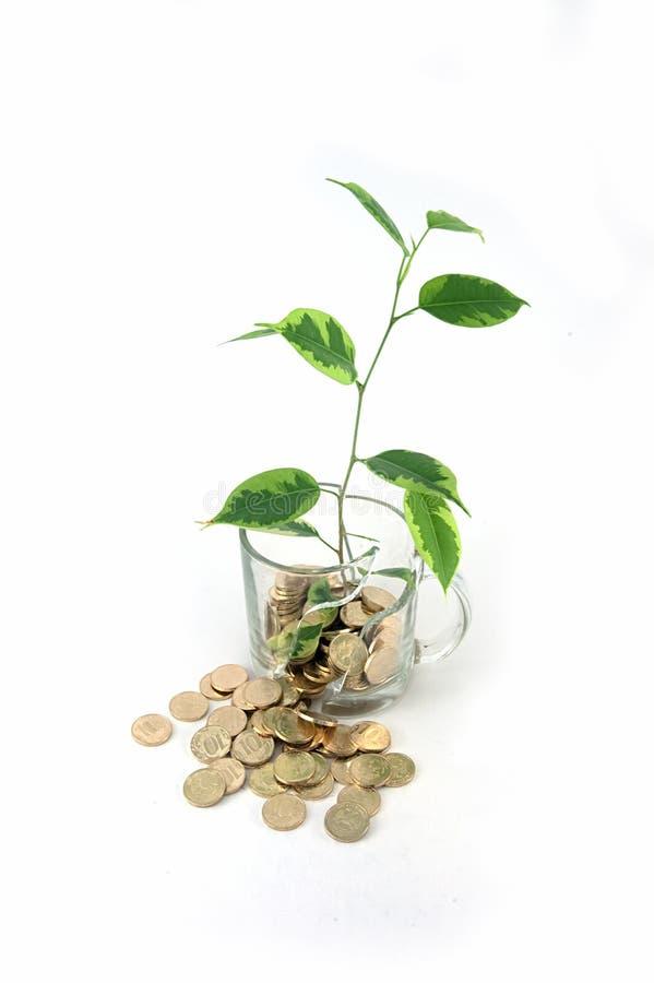 Download Ukuwać nazwę drzewa obraz stock. Obraz złożonej z bank - 13341389