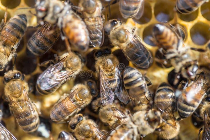 Ul z wiele pszczołami obraz stock