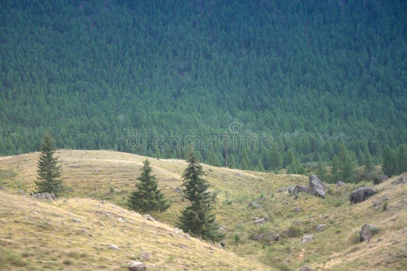 Ulagan Plain, Republic of Gorny Altai. Ulagan Plain, near the village of Balyktul, Republic of Gorny Altai, southern Siberia stock image