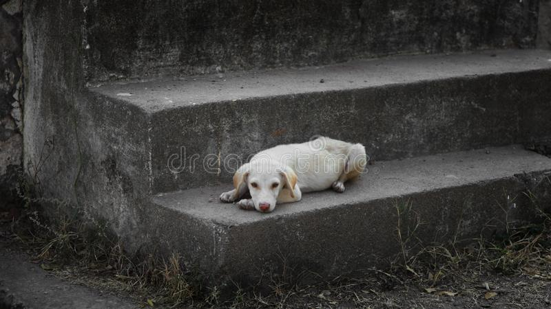 Ulica pies na schodkach zdjęcia stock