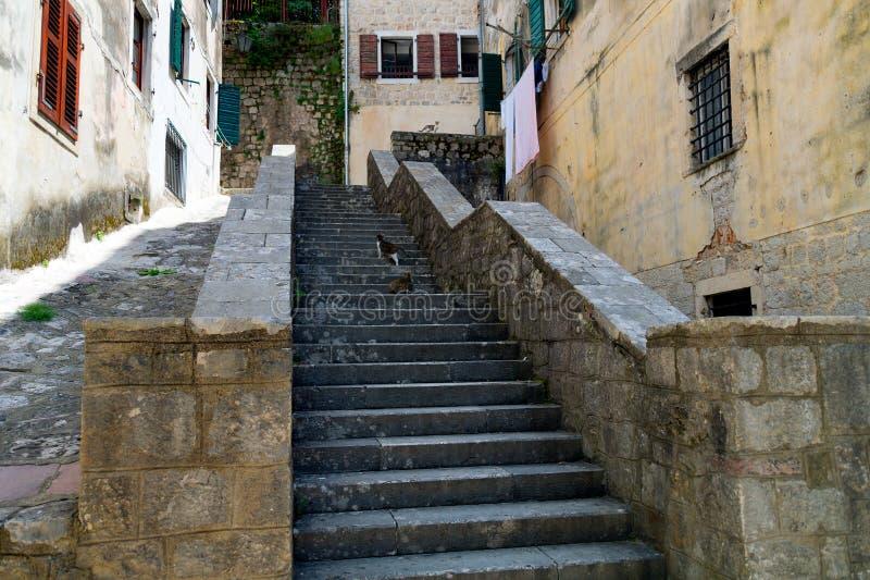 Ulica Stary Kotor, Montenegro drabina z trzy kotami czeka niektóre jedzenie zdjęcia royalty free
