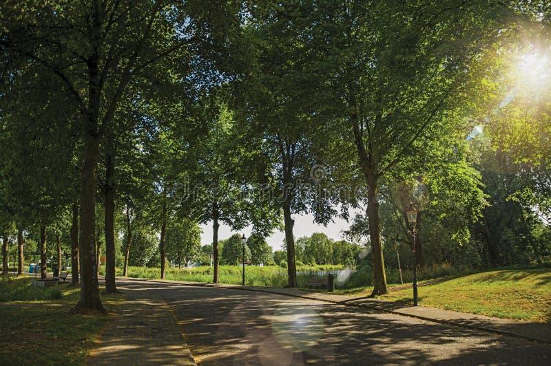 Ulica w cieniu obfitolistni drzewa blisko kanału z niebieskim niebem i zmierzch zaświecamy przy Weesp zdjęcia royalty free