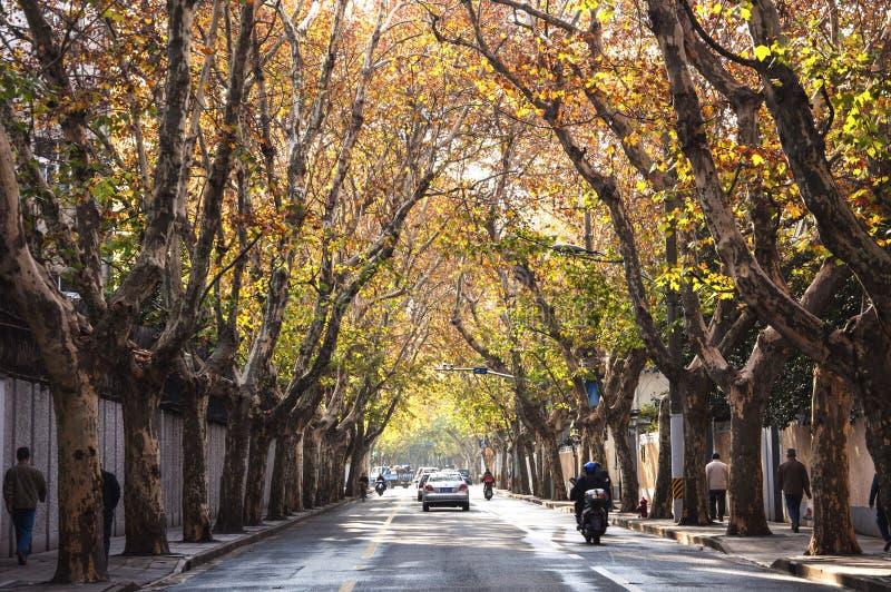 Ulica w jesieni w Szanghaj zdjęcia stock