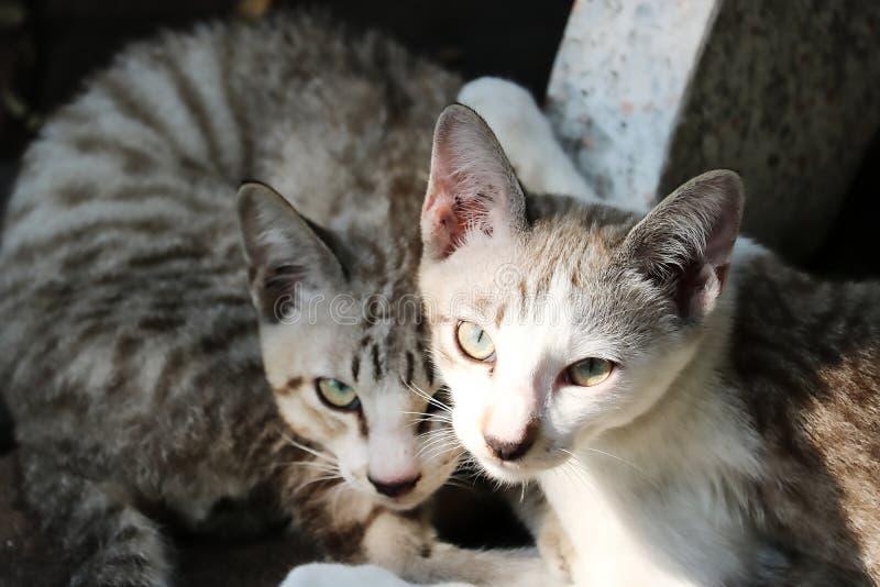 Uliczna kot para w Bangkok obrazy stock
