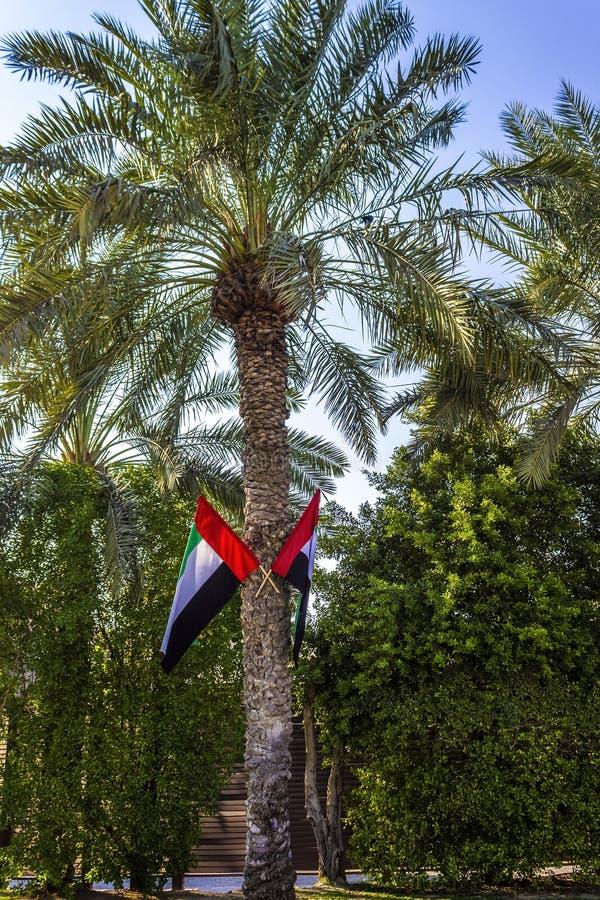 Uliczni drzewka palmowe obraz royalty free
