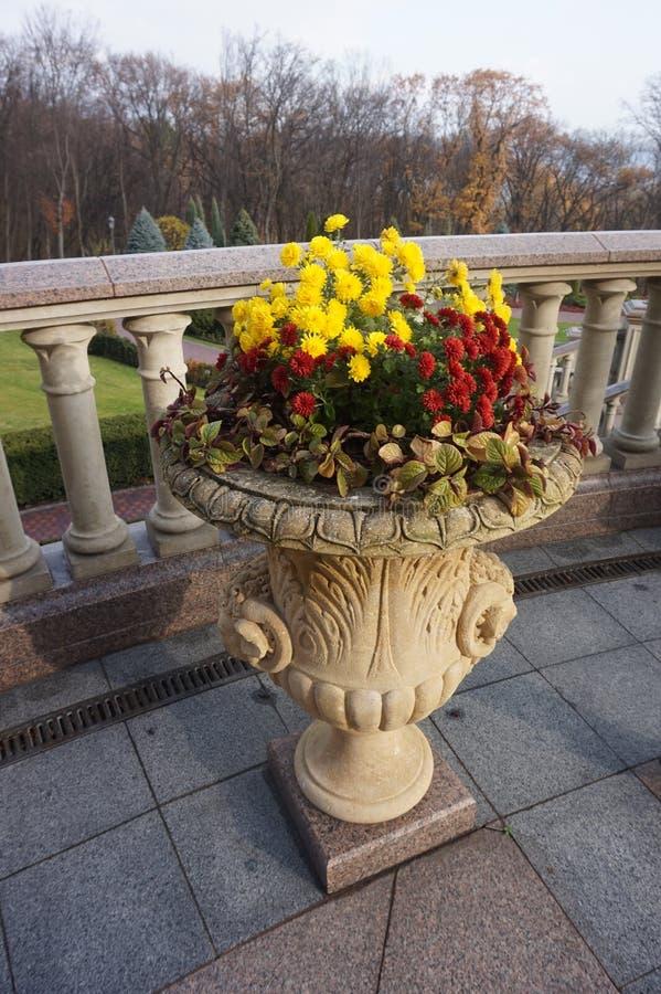 Uliczny flowerpot z chryzantemami fotografia royalty free