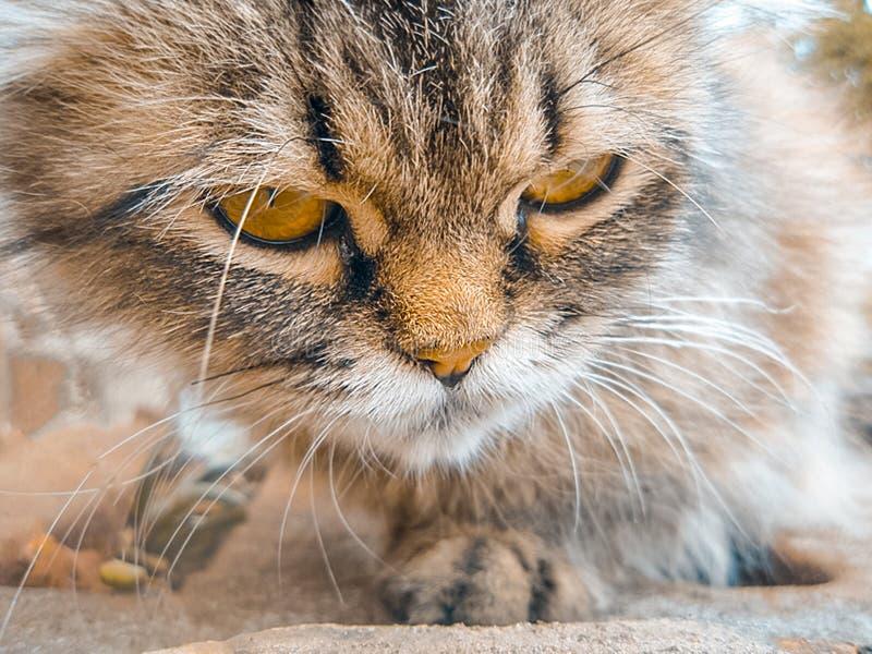 Uliczny gniewny kot w słonecznym dniu Bezdomny kot na miasto ulicie wokoło szukać jedzenie obrazy royalty free