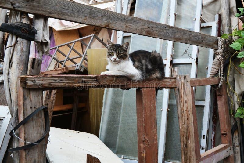 Uliczny kot Między Starymi drzwiami Na deszczowym dniu fotografia royalty free