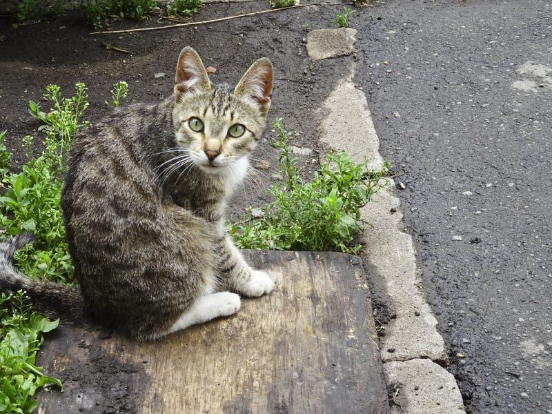 Uliczny kot myjący i nagle zobaczył fotografa obrazy royalty free