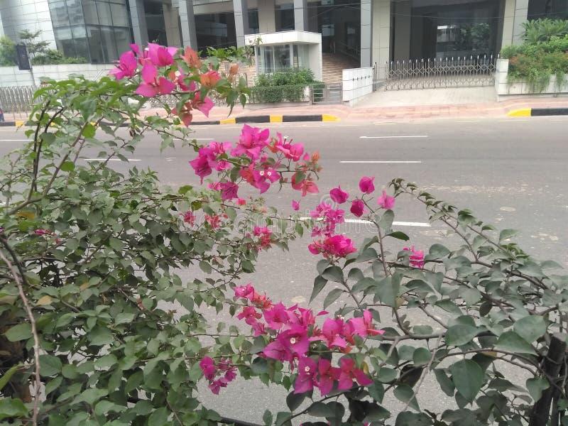 Uliczny kwiatu Dhaka miasto Bangladesz obrazy stock