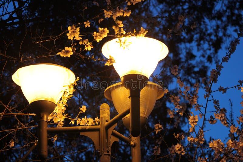 Uliczny lampion obrazy royalty free