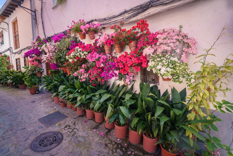 Uliczny pe?ny flowerpots na pod?odze i ?cianach w Hiszpania, fotografia royalty free
