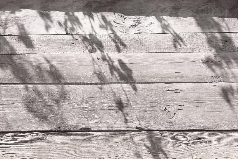 Ulistnienie cie? na szarej drewnianej ?cianie Beautyful cienia t?o fotografia stock