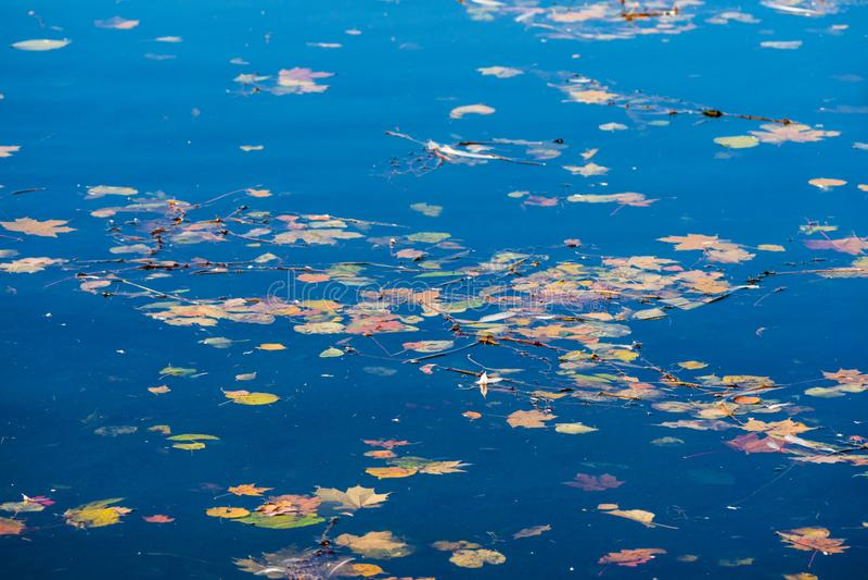 Ulistnienie na jasnej wodzie jest jeden znaki ` Indiańskiego lata ` w Rosja fotografia royalty free