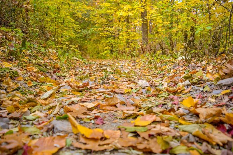 Ulistnienie na lasowej podłodze jest w ogniu z jesiennymi spadków kolorami fotografia stock