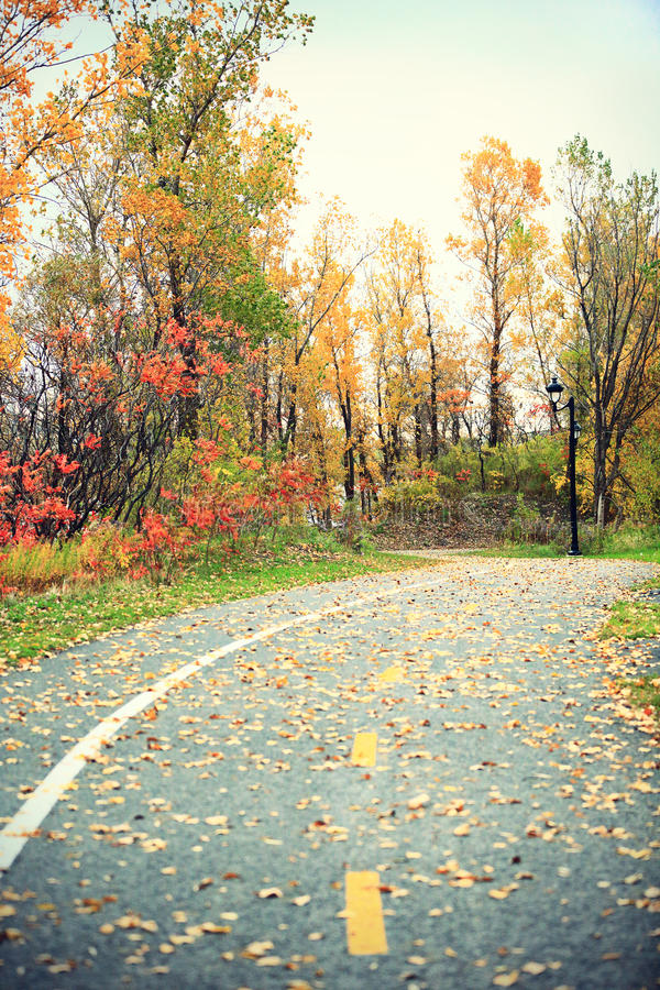 Ulistnienie - spadek wiejska droga z jesień liśćmi zdjęcia royalty free