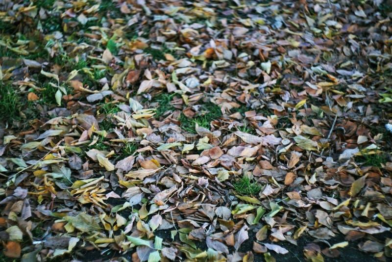 Ulistnienie w jesieni prześcieradła tła roślinności florze zdjęcie royalty free